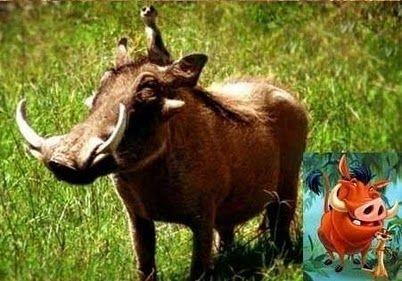 Timon y Pumba en la vida real