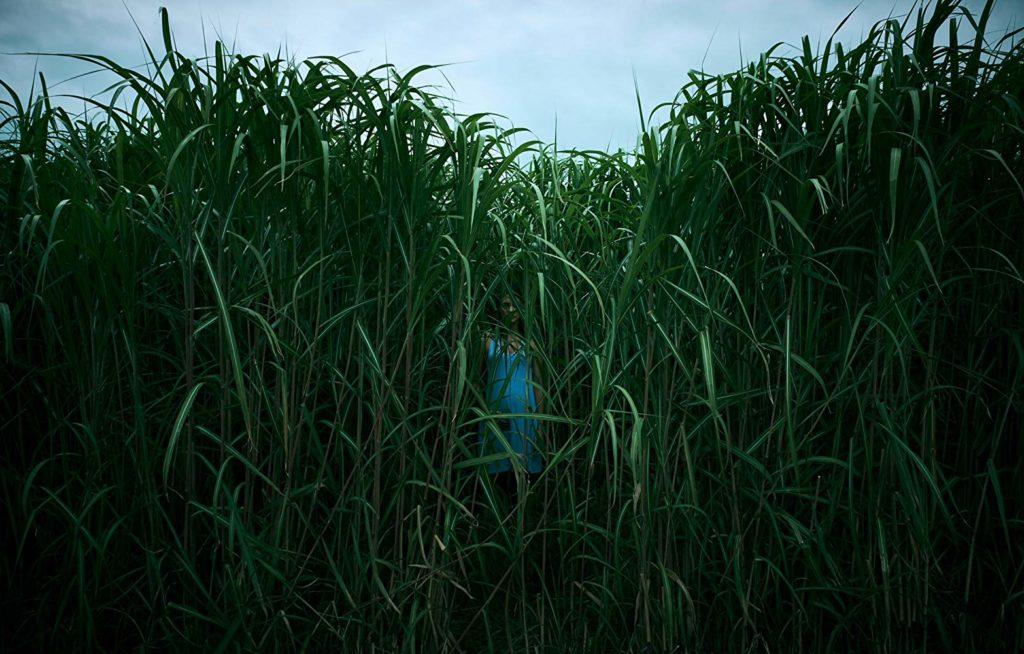 En la hierba alta